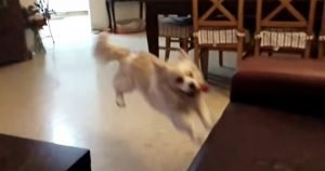 Dog jumps in slow motion, and…