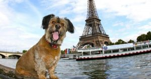 Dogs and cats no longer considered property in France
