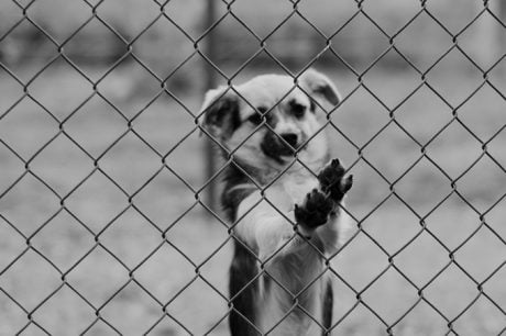 Spotting And Reporting Pet Abuse
