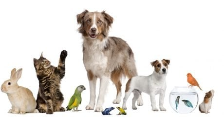 Pamper your pets this National Pet Month