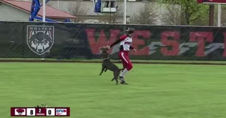 Pit Bull crashes college softball game