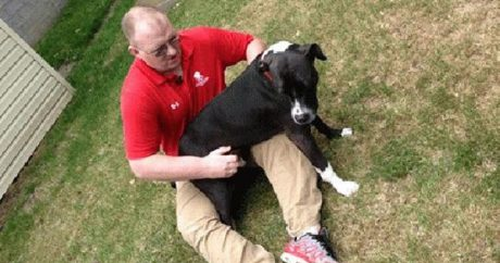 Rescue dog calls 911 for collapsed veteran