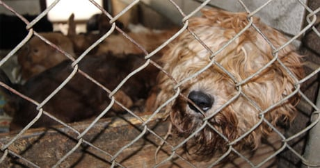 More than 90 dogs rescued from Michigan puppy mill - Dogtime