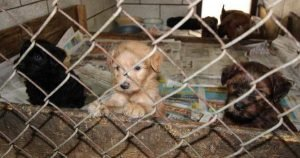 More than 90 dogs rescued from Michigan puppy mill