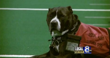 Service dog walks across graduation stage in honor of late owner