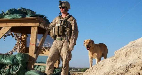 Marine adopts Military Working Dog after 4 years apart