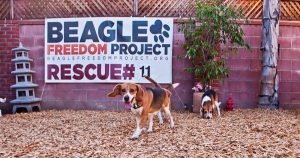 Victory for laboratory Beagles and the organization trying to save them