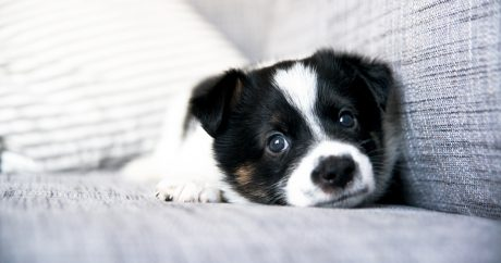 Researchers may have stumbled upon cure for parvovirus