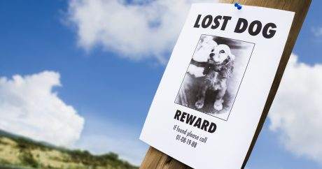 Seven things to do if your pet is lost