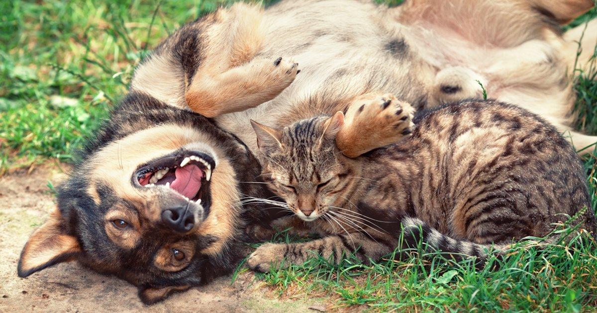 The Truth About Dogs And Cats Dogtime