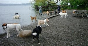 Top 8 dog parks in America