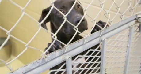 Organization trains homeless dogs for police work