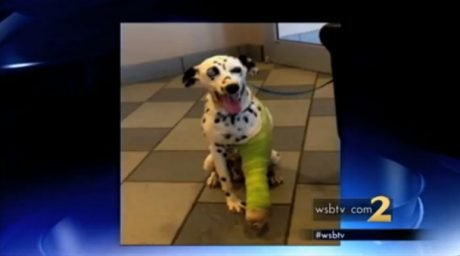 Police officer rescues and rehomes injured Dalmatian