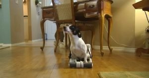 Home Depot employees build wheelchair for paralyzed dog