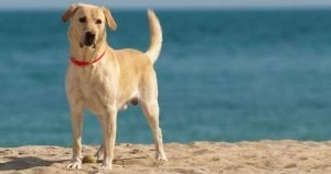 Top 12 dog-friendly beaches