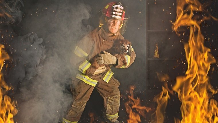 A Firefighter rescues a small dog from a fire.