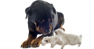 The top 10 most expensive pets
