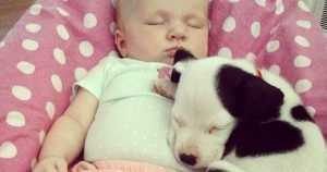 Puppy snuggles with baby