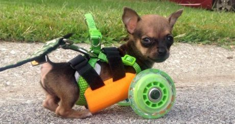 TurboRoo gets new wheels