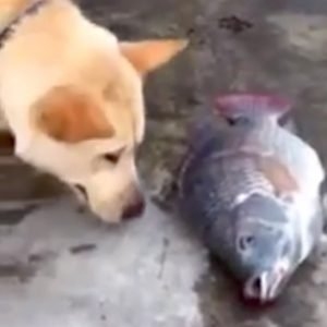 Dog tries to save fish