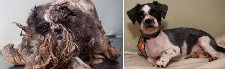 San Francisco Dog Rescue Abused And Neglected Dogs