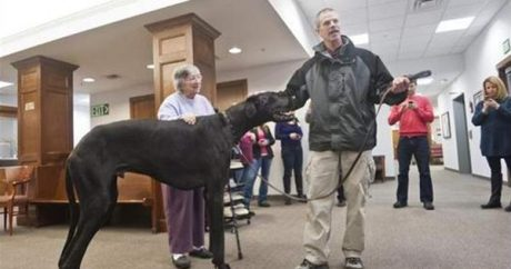 Tallest dog in the world passes away