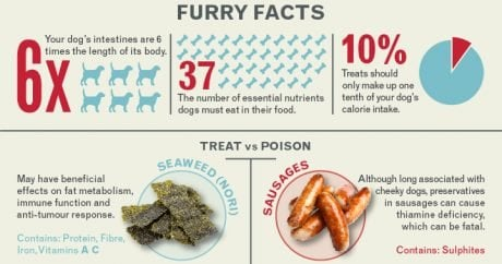What is a treat, and what is poison for dogs