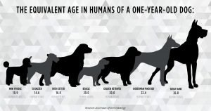 "Flaws in the 7-year rule: How accurate are ""dog years?"""