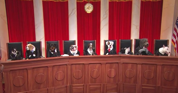 john oliver u0026 39 s take on puppy justice