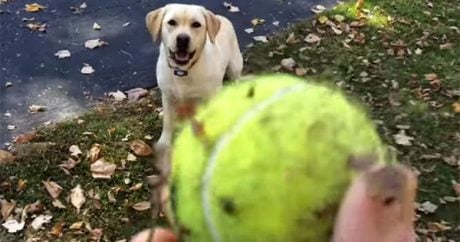 A dog, a tennis ball, and a pile of leaves