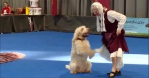 Dancing with the…dogs?