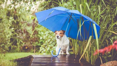 5 Fun Dog Activities For A Rainy Day