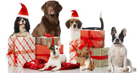 DogTime's 2014 Holiday Gift Guide