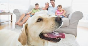 Practical tips for a dog-friendly home