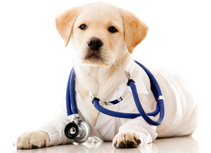 VetPronto: A new way for your dog to see the vet