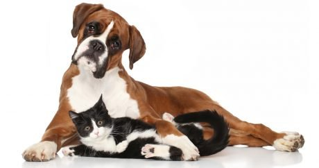 Free workshops to help shelter dogs and cats