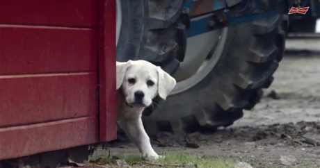 "2015 Budweiser Super Bowl XLIX commercial: ""Lost Dog"""
