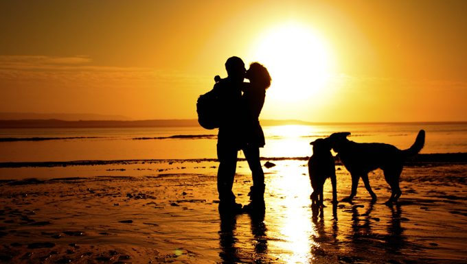 couple kiss on beach at sunset next to dogs