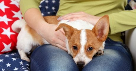 Can Dogs Read Your Emotions?