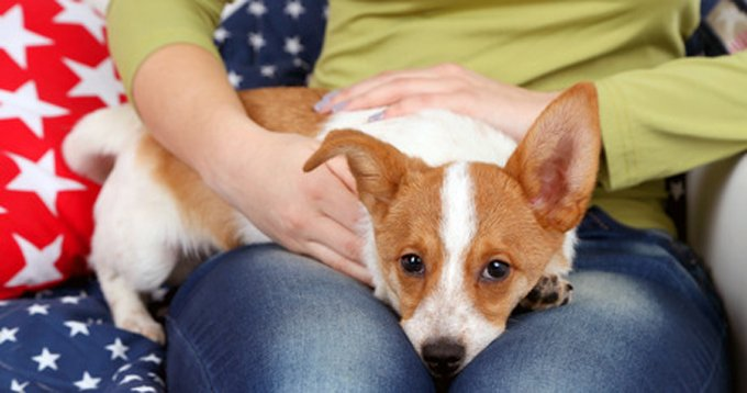 Can dogs read our emotions? (Picture Credit: Shutterstock)