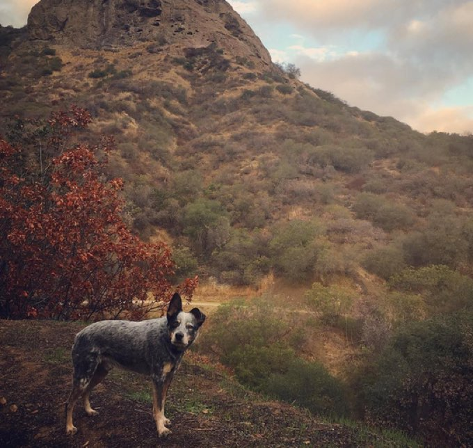 dog-hiking-los-angeles