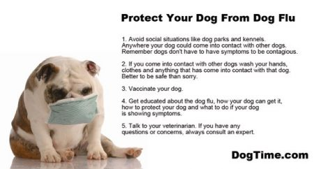 The Dog Flu Epidemic: How To Protect Your Dog