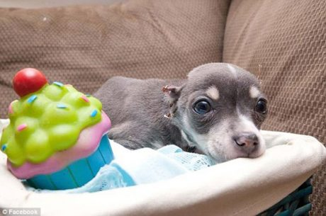 Tortured Puppy Named Fireman Recovering: Reward Offered
