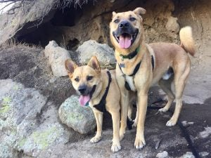 Top 10 Best Places To Hike With Your Dog In Los Angeles