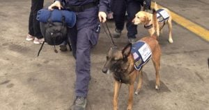 12 Canines From The Disaster Assistance Response Team (DART) Have Arrived In Nepal