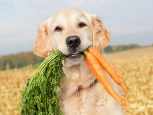 Human Foods That Are OK For Dogs