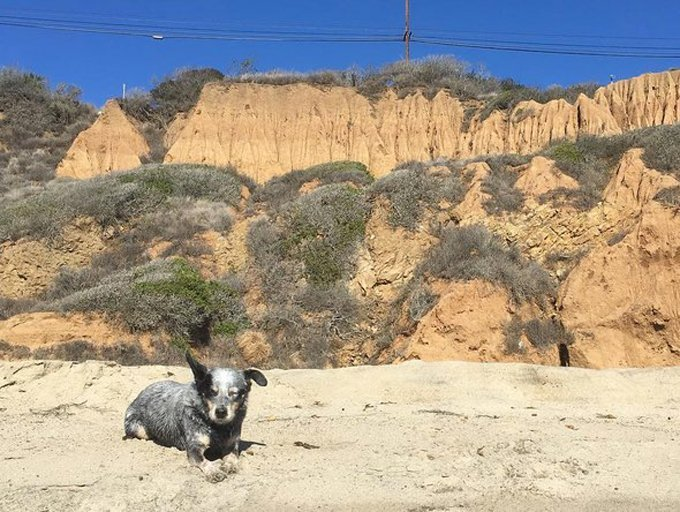 zuma-hiking-dogs-los-angeles