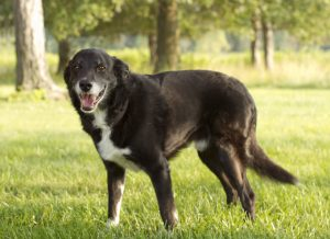 6 Good Reasons For Adopting A Senior Or Older Dog