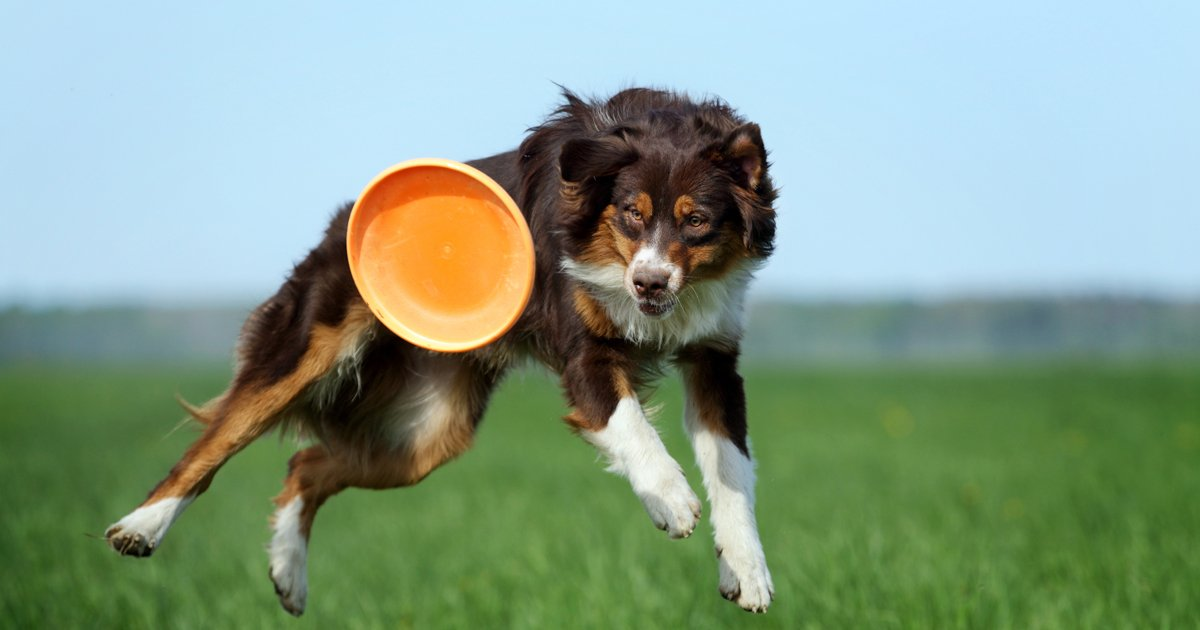 Cool Dog Training Tricks