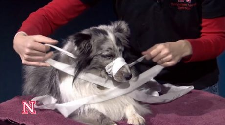 How To Make A Dog Muzzle Out Of Gauze Or Fabric